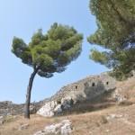 Baum auf der Festung Kalaja