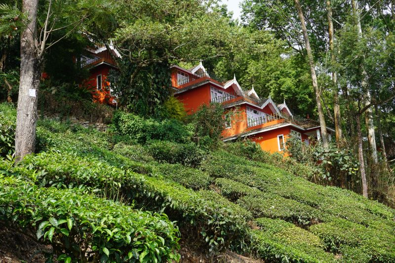 tea valley hotel